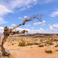 Desertificación y sequía: las mayores plagas que amenazan a la humanidad