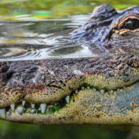 La Guardia Civil deja de buscar al supuesto cocodrilo del Pisuerga