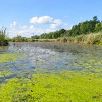 Algas nocivas están asfixiando los lagos de todo el mundo