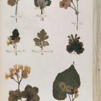 Un paseo por el herbario de Emily Dickinson, pionera del confinamiento