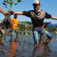 La adaptación al cambio climático necesita más soluciones basadas en la naturaleza