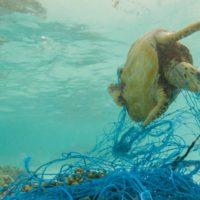 Se necesitan medidas urgentes para salvar los océanos de Europa