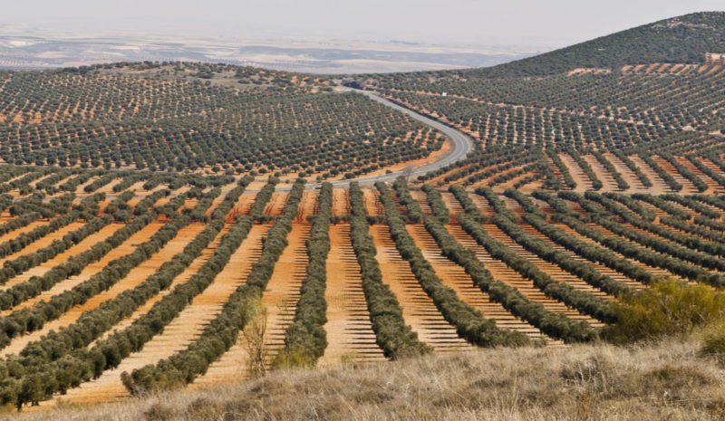 La política agraria desde 1939 a 1975 (II)