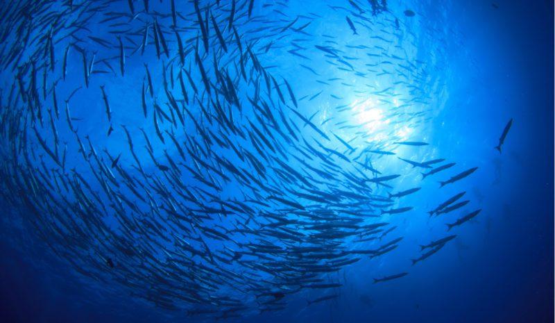 'Seaspiracy', un polémico documental sobre pesca con luces y sombras
