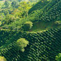 Los retos del medio ambiente en Colombia, una joya de la biodiversidad
