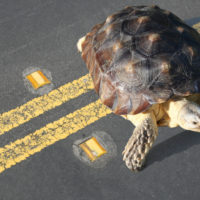 ¿Cuántos animales mueren en las carreteras europeas cada año?