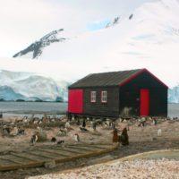 Solo un tercio de la Antártida está libre del impacto humano