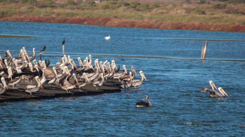Lluvias en Chile: un regalo para los humedales