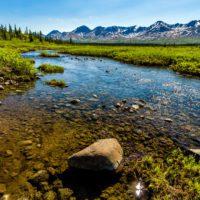 La vegetación conquista Alaska impulsada por la crisis climática