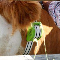 Cencerro digital: internet de las cosas aplicado a la ganadería