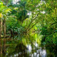 El aroma de la selva amazónica ha cambiado por la acción humana