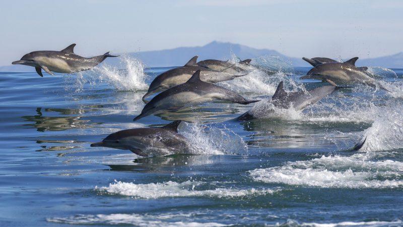 Ballenas y delfines, ¿cuánto sabes sobre estos animales acuáticos?