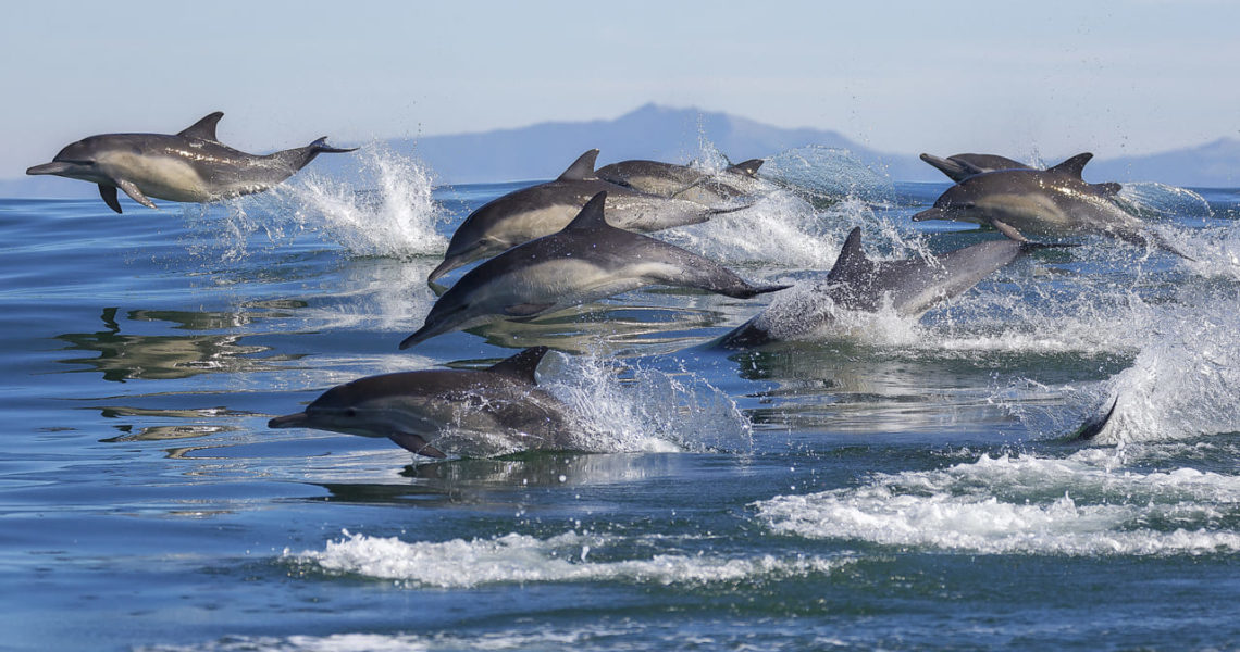 España, Francia y Portugal se unen para proteger a los cetáceos