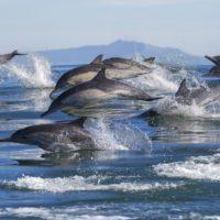 Expediente sancionador contra España por no evitar la pesca accidental de cetáceos