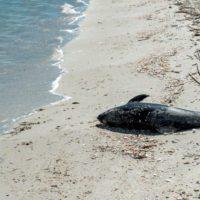 Observadores informarán desde los buques sobre la pesca accidental de cetáceos