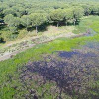 La cerveza que devuelve a Doñana 1.000 millones de litros de agua al año