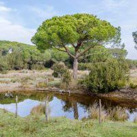 """Entra en vigor la declaración """"en riesgo"""" de tres masas de agua de Doñana"""