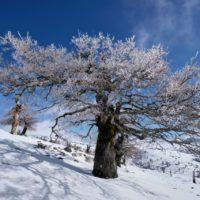 Luz verde para crear el Parque Nacional Sierra de las Nieves