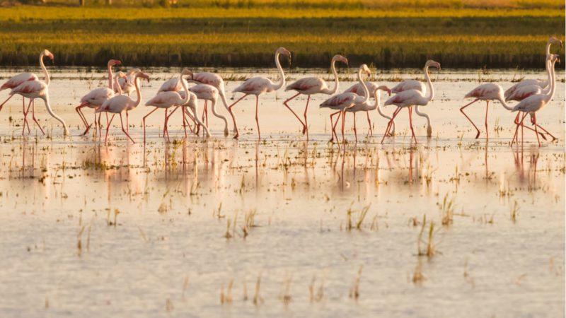 El Miteco comienza trabajos para mejorar la sedimentación en el Delta del Ebro
