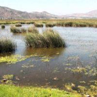 Humedal de Batuco: un rescate que suma a toda la comunidad