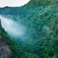 A la caza del agua de niebla para recuperar bosques en Canarias