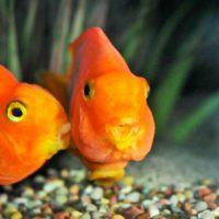 La reproducción del 60% de los peces, amenazada por un clima más cálido