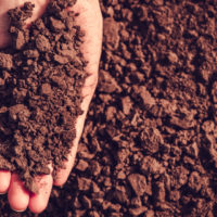 Los suelos, un sistema vivo al que proteger