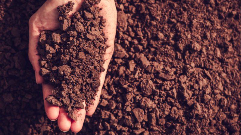 Suelos vivos y biodiversos para un planeta mejor