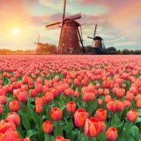 ¿Sabías qué el tulipán fue la flor más cara del mundo?