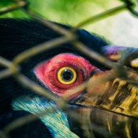 La ONU alerta del peligro para la salud humana del tráfico ilegal de especies