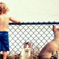 ¿Ha aumentado el abandono de animales domésticos tras el confinamiento?