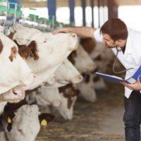Veterinarios, la pieza clave para la prevención de futuras pandemias