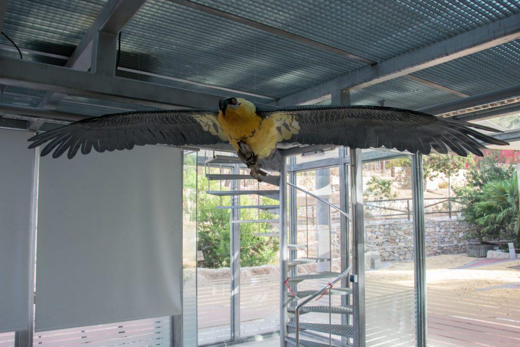 Vista parcial del espacio expositivo dedicado al nido histórico de quebrantahuesos hallado en Murcia y que puede visitarse en el Centro de Recuperación de Fauna Silvestre de El Valle, Murcia. | FOTO: Carlos Egio
