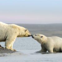 Trump abre una reserva natural del Ártico a la explotación petrolera