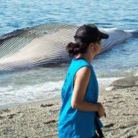 Canarias idea un pontón para rescatar cetáceos varados