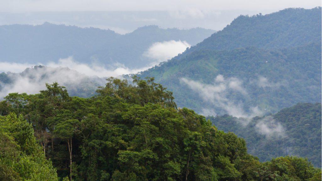 Bosque nublado en los Andes, el ecosistema húmedo donde crecen los árboles de la quina. | FOTO: A-Lens