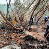 Colombia propone un plan para evitar los incendios en la Isla de Salamanca