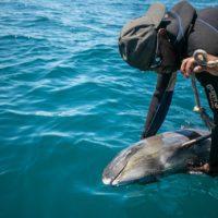 El vertido en Mauricio provoca la muerte masiva de delfines