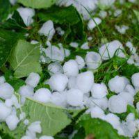 Las últimas tormentas dañan 24.000 hectáreas de cultivos en España