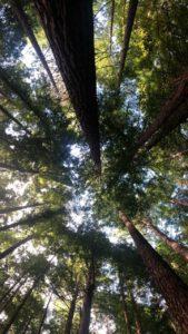 Las copas de los árboles se juntan y no dejan pasar apenas la luz del sol.