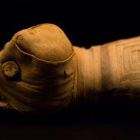 Los misterios de tres animales momificados en el Antiguo Egipto, al descubierto