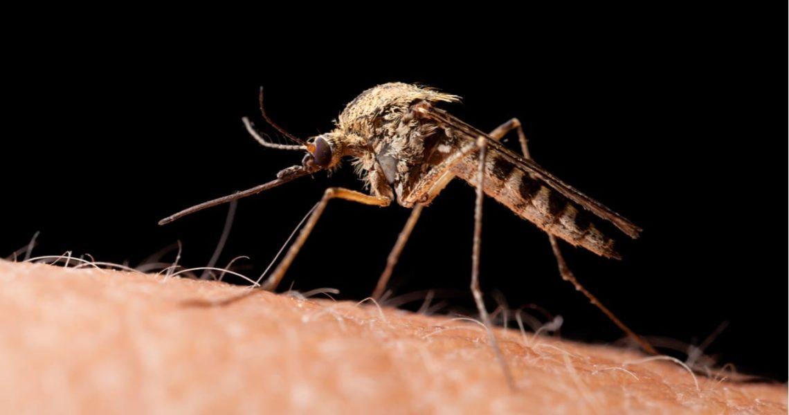 Caballos y mosquitos: el virus del valle del Guadalquivir