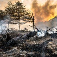 La actividad microbiana podría recuperar a largo plazo los suelos quemados