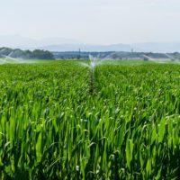 La magia de transformar agua en alimentos con un 22% menos de recursos hídricos