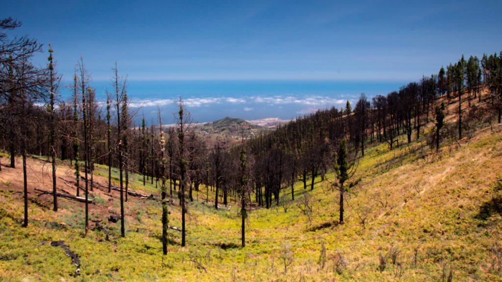 Estado actual de la vegetación en la zona 0 de Tamadaba   Foto: @TamaraKPhoto