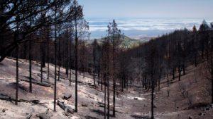 Estado tras el incendio de la vegetación en la zona 0 de Tamadaba | Foto: @TamaraKPhoto