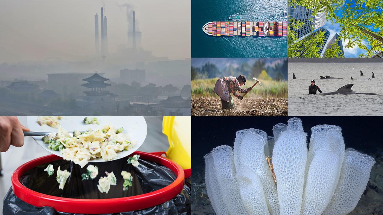 China se compromete a alcanzar la neutralidad de carbono en 2060