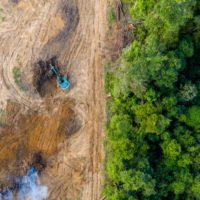 Más del 90% de las áreas protegidas, aisladas por la acción humana