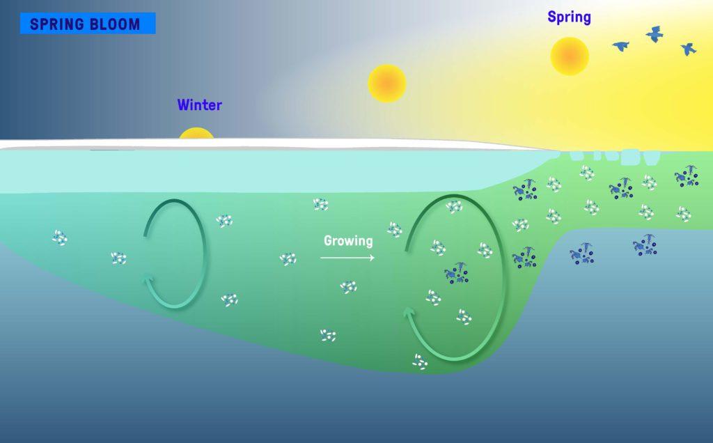 El fitoplancton comienza a crecer ya en invierno, mucho antes de que la primavera florezca en el borde del hielo | Fuente: Julie Sansoulet-Takuvik