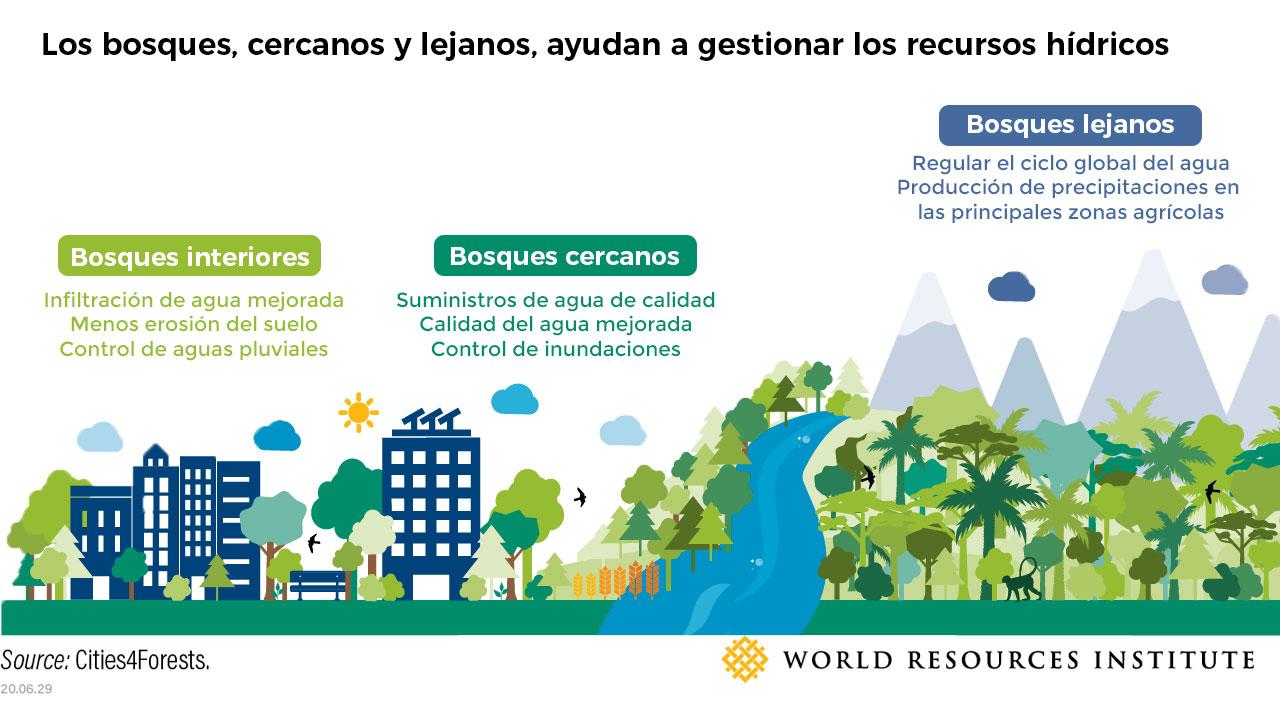 Beneficios que aportan los bosques a las ciudades y a la disponibilidad de agua en general |Foto: WRI